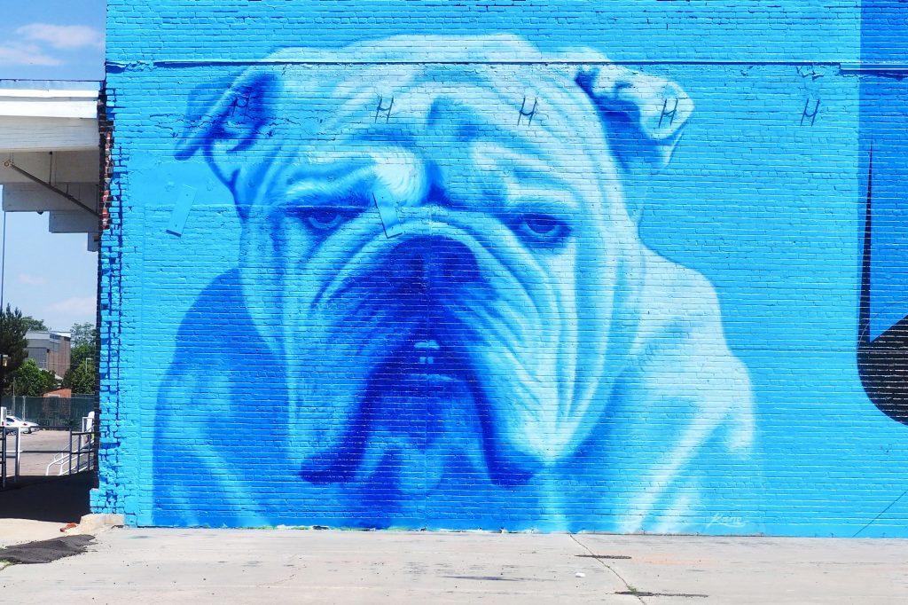Bull Dog Mural Image in Metro Denver Development Area - Chris Lindgren, Commercial Broker